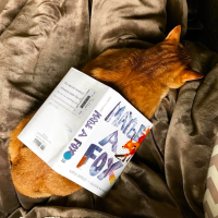 Insta Review: Maybe a Fox, by Kathi Appelt and Alison McGhee